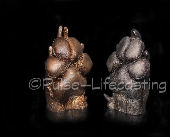 Lifecast of Dog Paws